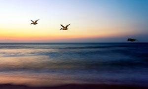 傍晚空中飞行的鸟群高清摄影图片