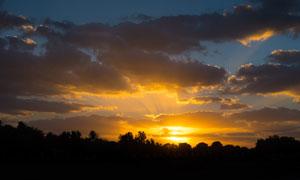 夕阳下的树林美景高清摄影图片
