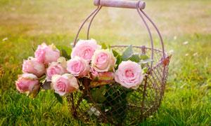 篮子里的粉色玫瑰花摄影图片