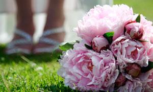 草地上的粉色牡丹花摄影图片