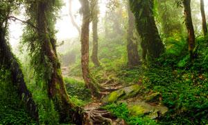 雾气蒙蒙的绿色森林高清摄影图片