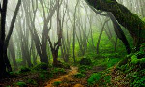 清晨雾气蒙蒙的森林摄影图片
