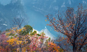 秋季山中树木和河流摄影图片