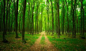 森林中的小路高清摄影图片