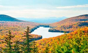 秋季金色森林美景全景摄影图片