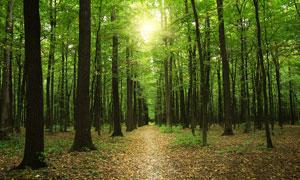 清晨阳光下的森林美景摄影图片