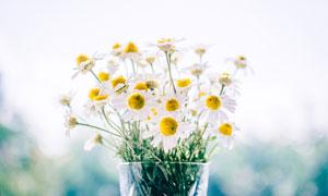 花瓶中盛开的菊花高清摄影图片