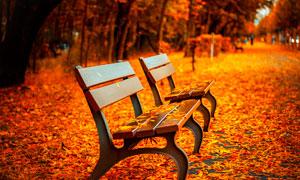 秋季公园中的靠椅和落叶摄影图片