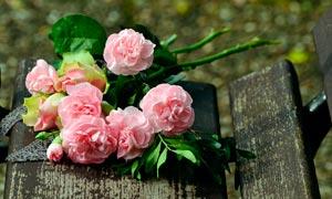 木椅子上的玫瑰花高清摄影图片