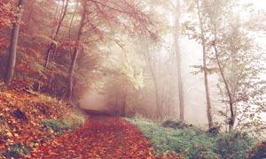 秋季公园中的道路和落叶摄影图片
