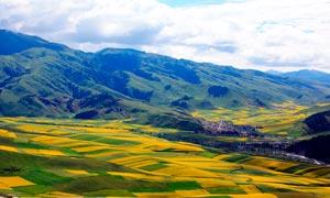 青海山坡美丽的农田高清摄影图片