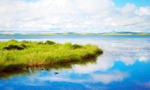 在湖邊棲息的野鴨子攝影圖片