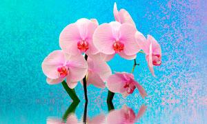 水中盛开的兰花高清摄影图片
