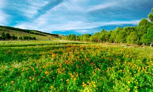 蓝天白云下的美丽花园摄影图片