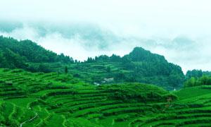 云和美丽的梯田景观摄影图片