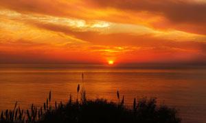 夕阳下湖边美丽的芦苇丛摄影图片