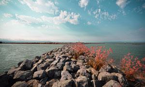 海边石头和植物摄影图片