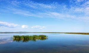 蓝天下湖泊中的草丛摄影图片