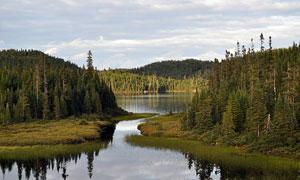 山中美麗的森林和湖泊攝影圖片