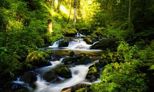 山中美丽的小溪流水摄影图片