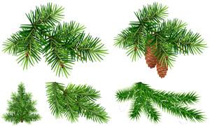 逼真质感绿色树枝主题设计矢量素材