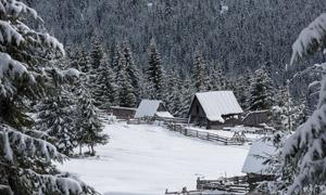 被积雪覆盖的小屋树林摄影高清图片