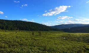 蓝天下的森林和高原高清摄影图片
