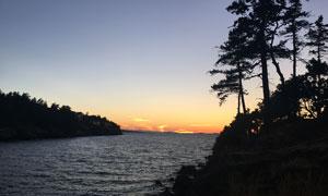 傍晚海边树木剪影高清摄影图片