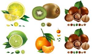 猕猴桃柠檬与橘子榛子主题矢量素材