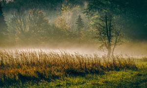 霧氣蒙蒙的樹林美景攝影圖片