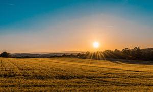清晨陽光下的農田攝影圖片