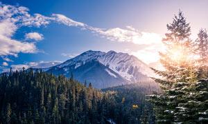 雪山下森林美景高清攝影圖片