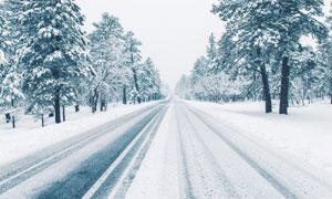 冰天雪地樹木道路風光攝影高清圖片