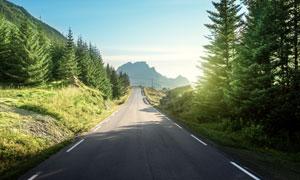 蓝天公路与郁葱的树木摄影高清图片