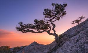 生長在山坡上的一棵樹攝影高清圖片