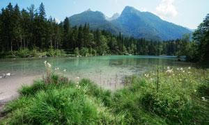 高山樹林與雜草叢生的水邊高清圖片