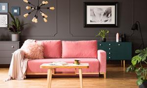 房间沙发与装饰画绿植摄影高清图片