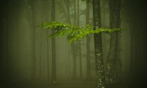 能见度较低的树林风光摄影高清图片