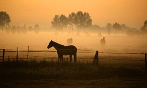 牧场上的马匹动物剪影摄影高清图片