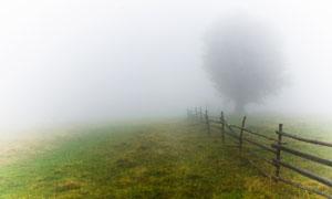 篱笆与隐约可见的大树摄影高清图片