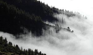 山間云霧茂密樹林風光攝影高清圖片