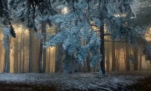 透进来阳光的树林风光全景摄影图片