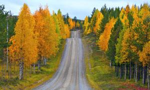 秋天道路層林盡染風景攝影高清圖片