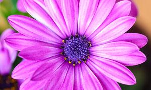 开出绚烂花的植物特写摄影高清图片