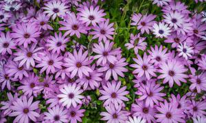 充滿生機的小菊花植物攝影高清圖片