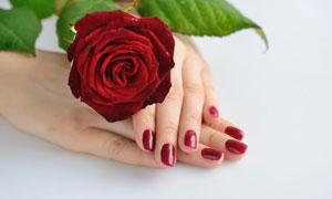 放在手背上的红色玫瑰摄影高清图片