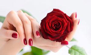 红色玫瑰花与美甲手势摄影高清图片