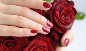 搭在红玫瑰花上的手势摄影高清图片