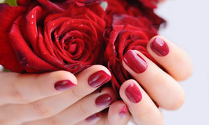 手中鲜嫩的红色玫瑰花摄影高清图片