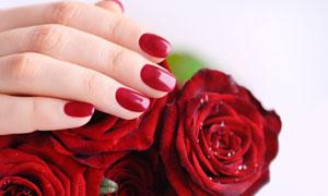 红玫瑰花朵上的手特写摄影高清图片